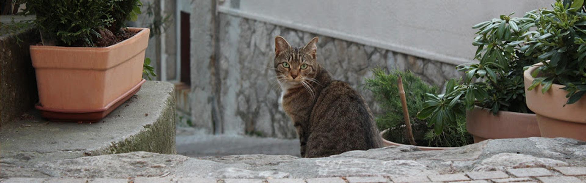 Cosa Animalia Association De Protection Animale Sur Grenoble