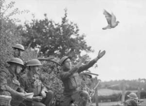 L-histoire-des-pigeons-2