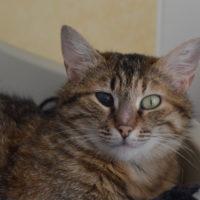 Tigrette